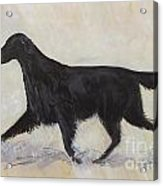 Flatcoat Retriever Acrylic Print