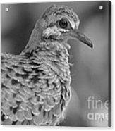 Fledgeling In Bw Acrylic Print by Lynda Dawson-Youngclaus