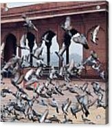 Flight Of Pigeons Inside The Jama Masjid In Delhi Acrylic Print