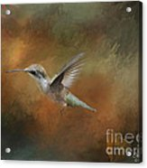 Flight Of The Angel  Acrylic Print by Cris Hayes