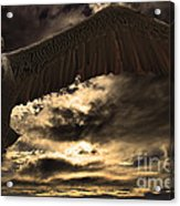 Flight Of The Brown Pelican Acrylic Print