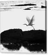 Flight Of The Egret Acrylic Print