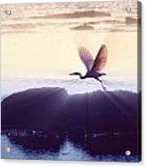 Flight Of The Egret V1 Acrylic Print
