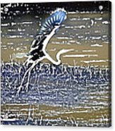 Flight Of The Egret V5 Acrylic Print