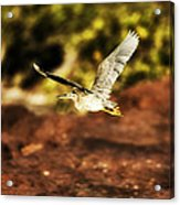 Flight Of The Heron  Acrylic Print