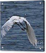 Flight Over The Lake 3 Acrylic Print