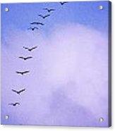 Flight Stripe Acrylic Print