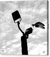 Flightpost Acrylic Print