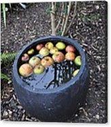 Floating Apples Acrylic Print