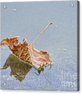Floating Down Lifes Path 2 Acrylic Print