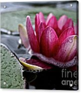 Floating Floral Acrylic Print