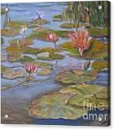Floating Lillies Acrylic Print by Mohamed Hirji