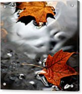 Floating Maple Leaves Acrylic Print