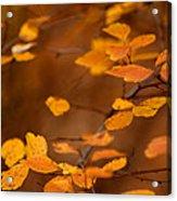 Floating On Orange Fall Leaves Acrylic Print