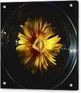 Floatting Flower Acrylic Print