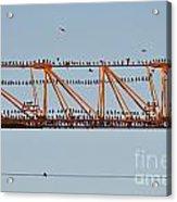 Flock Of Birds Perching On Construction Crane Acrylic Print