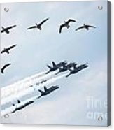 Flock Of Canada Geese At Air Show Acrylic Print