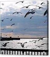 Flocking Gulls Acrylic Print