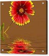 Flooded Beach Flower Acrylic Print