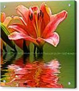 Flooded Lily Acrylic Print