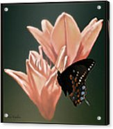 Floral Butterfly Dance Acrylic Print