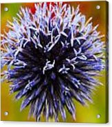 Floral Colors Acrylic Print