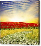 Floral Field On Sunset Acrylic Print