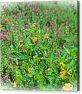 Floral Gardens Acrylic Print