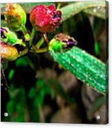 Floral Whispers Acrylic Print