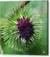 Floral1 Acrylic Print