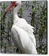 Florida Crane Acrylic Print