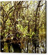 Florida Everglades 9 Acrylic Print