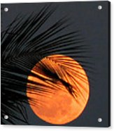 Florida Moonrise Acrylic Print