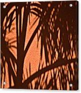 Florida Palm Shadow Acrylic Print