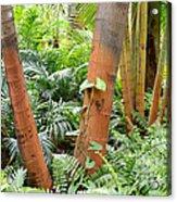 Florida Palms And Ferns Acrylic Print
