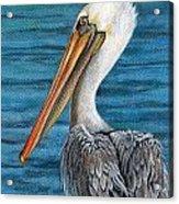 Florida Pelican Acrylic Print by Peggy Dreher