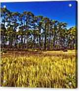 Florida Pine 3 Acrylic Print