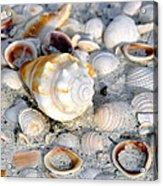 Florida Shells Acrylic Print