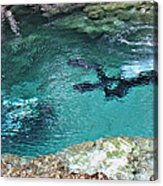 Florida Springs Cave Divers Acrylic Print