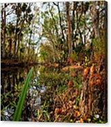 Florida Stream Acrylic Print