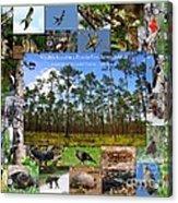 Florida Wildlife Photo Collage Acrylic Print
