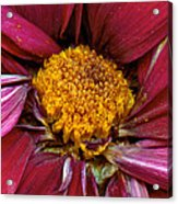 Flower - At The Center Of It All Acrylic Print