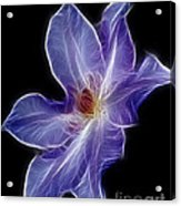 Flower - Clematis - Abstract Acrylic Print