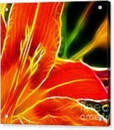 Flower - Lily 1 - Abstract Acrylic Print