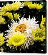 Flower 21 Acrylic Print
