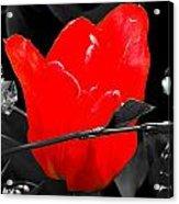 Flower 23 Acrylic Print