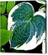 Flower 29 Acrylic Print