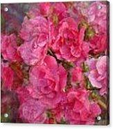 Flower 290 Acrylic Print