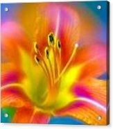 Flower 30 Acrylic Print