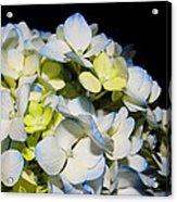 Flower 75 Acrylic Print